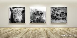 Art Show Of Black And White Large Format Farm Photographs